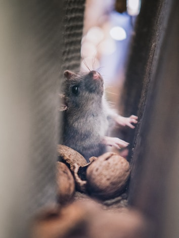 Rodent Related Threats